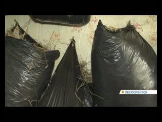 В Лесосибирске соседи мучаются от вони и криков птиц из квартиры с курятником