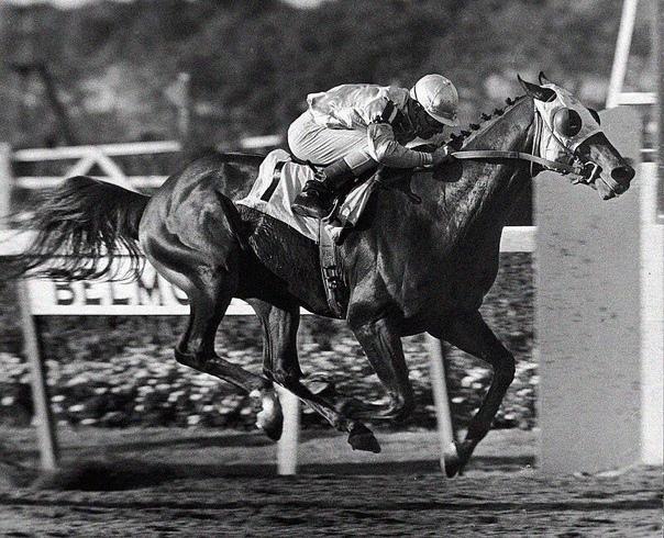 В 1923 году в Нью-Йорке проводились лошадиные скачки Прямо во время забега у одного из жокеев по имени Фрэнк Хейз случился инфаркт.Его лошадь, тем не менее, пришла к финишу первой уже с мёртвым