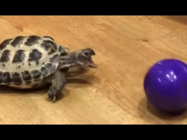 You can play ball with ANY animal!!