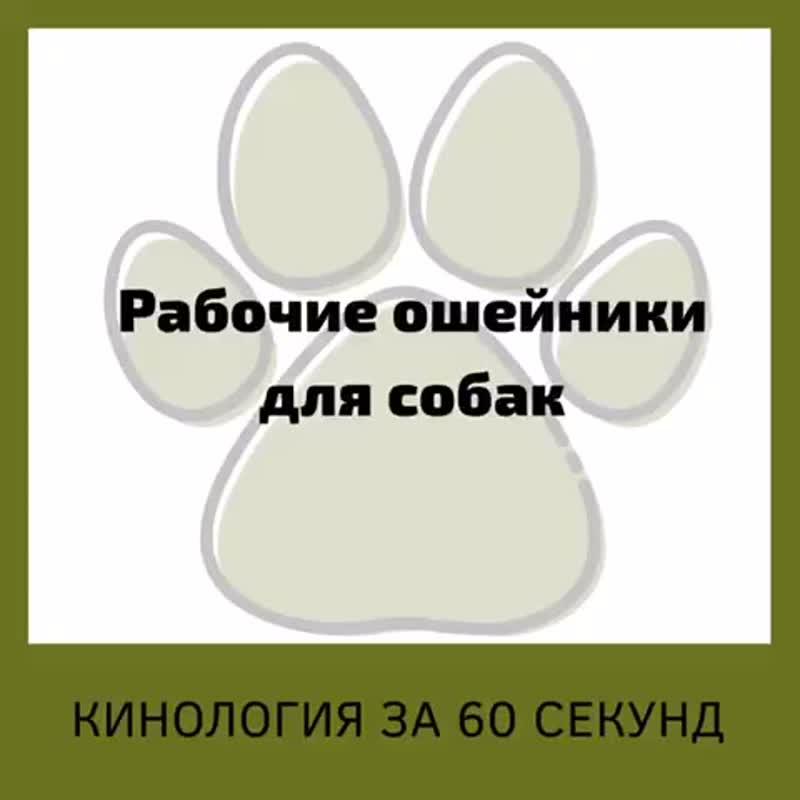Рабочие ошейники для собак