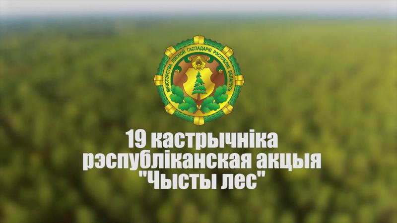 Акцыя Чысты лес пройдзе ў Беларусі 19 кастрычніка