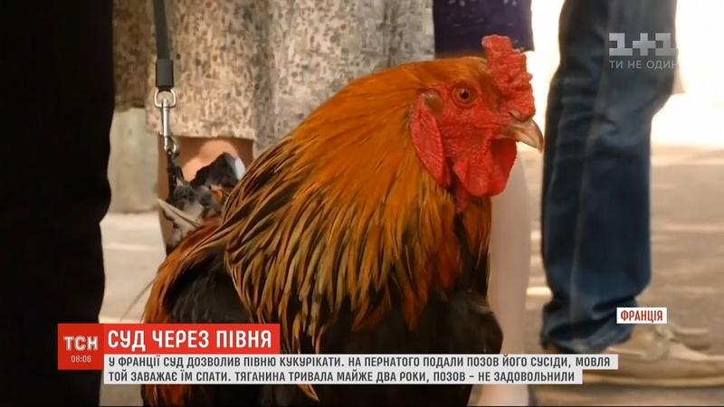 У Франції суд дозволив кукурікати півню, на якого скаржилися жителі маленького містечка