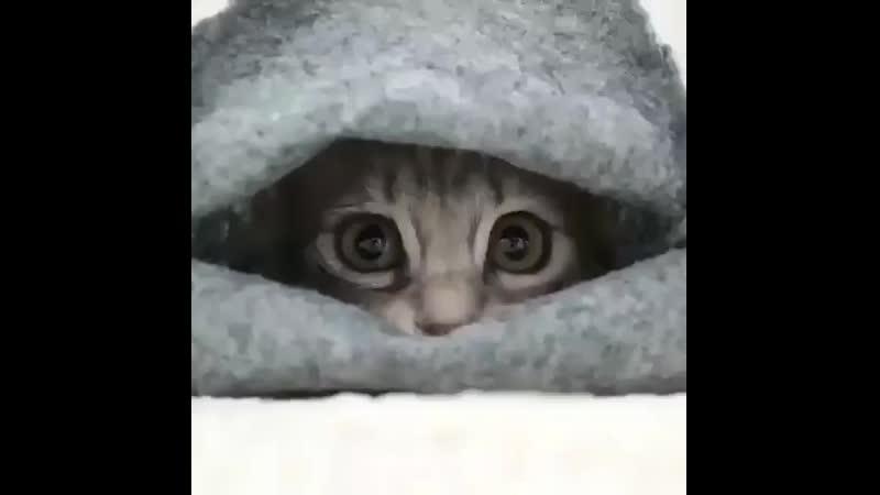 Sweet-Playful-Kitten-in-blanket.mp4