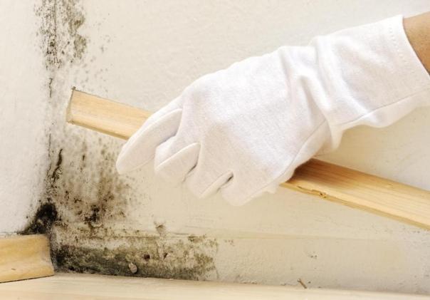 Борьба с грибком на стенах  еще одна тяжкая проблема в ремонте, но после обработки стен таким веществом, вы забудете, как выглядит грибок