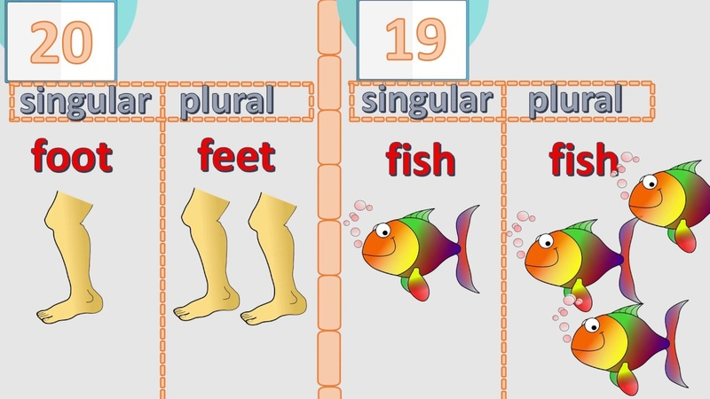 20 irregular plurals of English nouns – check if you know them all English language