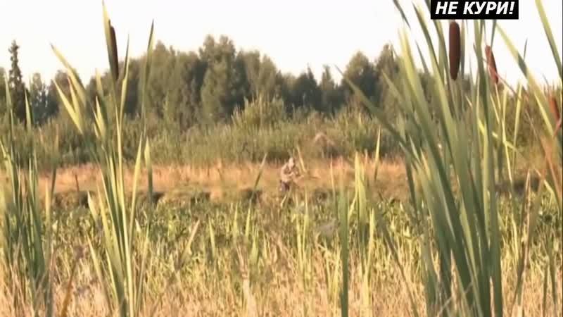 Охота на дупеля с дратхааром. Охота по болотно-луговой дичи . 2018