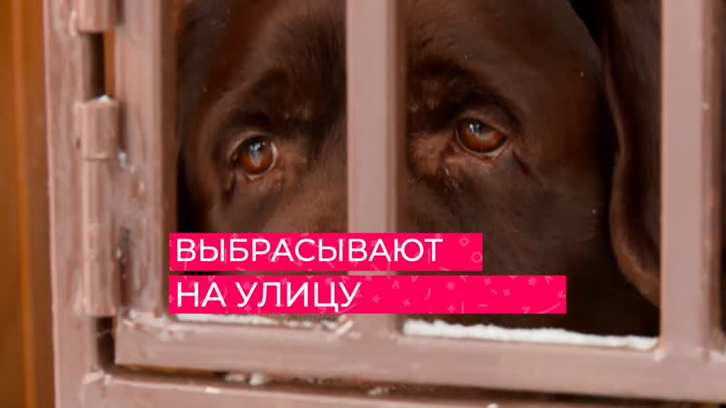В Тюмени всё чаще находят брошенных породистых собак