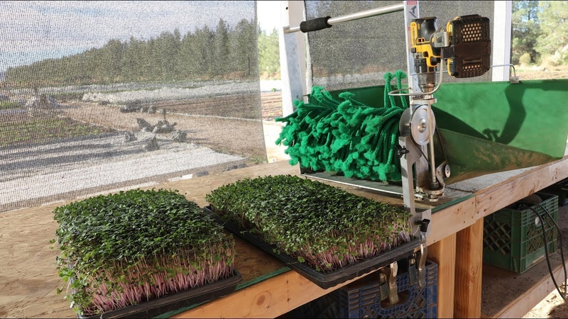 The FASTEST and EASIEST Way EVER to Harvest Microgreens