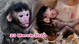 HOT NEWS Congrats To Old Mom Mounta Just Giving Birth To Newborn Baby Now Adorable Wildlife 2020
