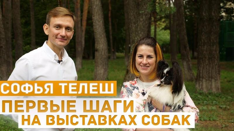 Первые шаги на выставках собак: об эмоциях отношении к выставкам занятиях хендлер Софья Телеш