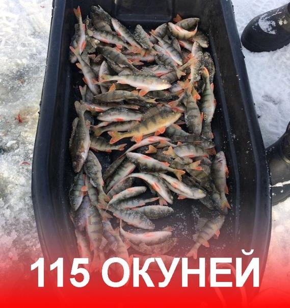 Отчеты о рыбалке на озерах