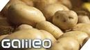 Wie schmeckt eine Luxus-Kartoffel? Die teuersten Grundnahrungsmittel der Welt | Galileo | ProSieben
