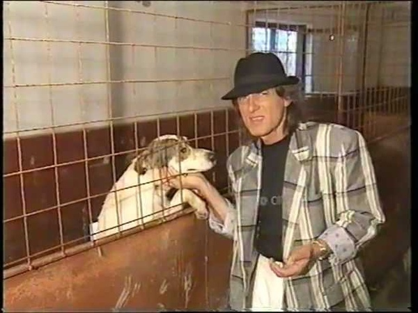 Mihai Constantinescu Iubiti si cainii vagabonzi original