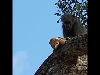 Король лев в реальной жизни