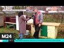 Жители населенных пунктов вблизи полигона Тимохово жалуются на запах - Москва 24