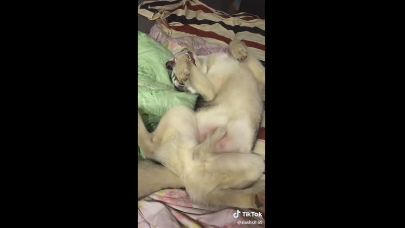 безумие бесовой собаки