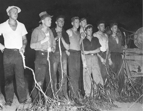 Добровольные дружины по тушению лесных пожаров в «Черную пятницу», Австралия, 13 января 1939 года.