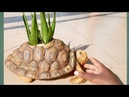 Amazing ideas with cement Ideas making Realistic Turtle cement pot DIY Cement Craft Ideas