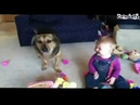 Ребенок и собака смешно до слез!