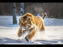 Дикая природа России Wildlife in Russia National Geographic 4K Ultra HD