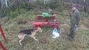 Охота на зайца с Русскими гончими 10 11 19