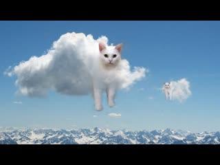 Смешные коты | Подборка за неделю #11 | Котопятница