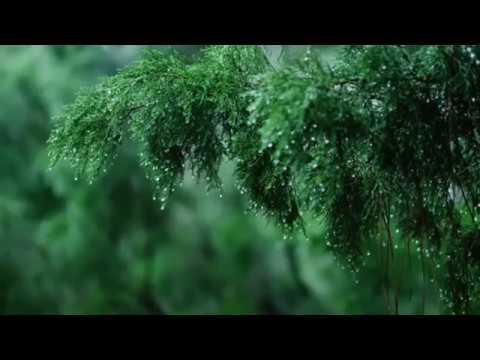 Чайтанья Чандра Чаран Прабху - ДЖАПА И ДОЖДЬ