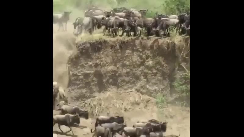 Великая миграция