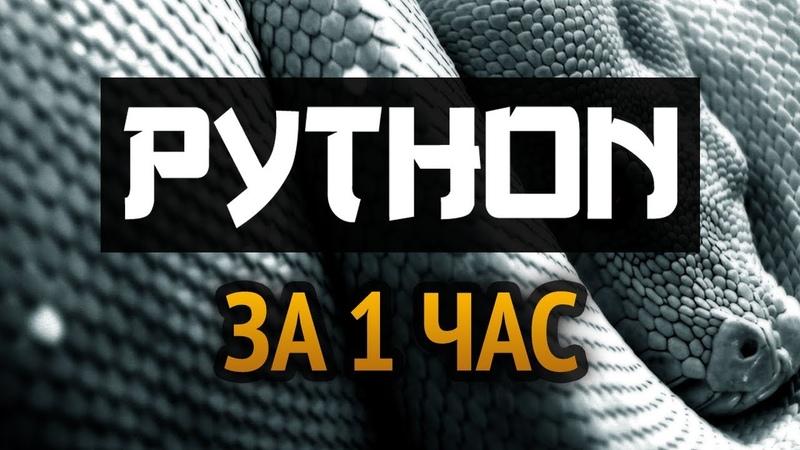 Учим Python за 1 час! От Профессионала