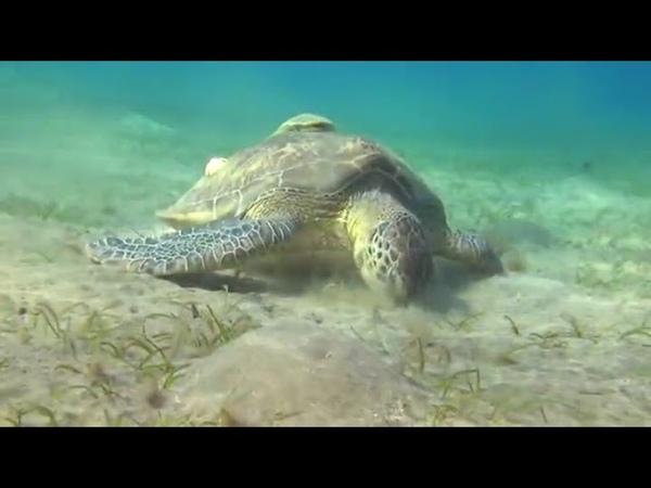 Коралловый риф 3D Подводный мир Египта 2012 podvodnuy mir egipta