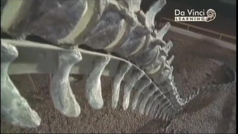 История царства животных 5 Хордовые Кости мышцы и мозги