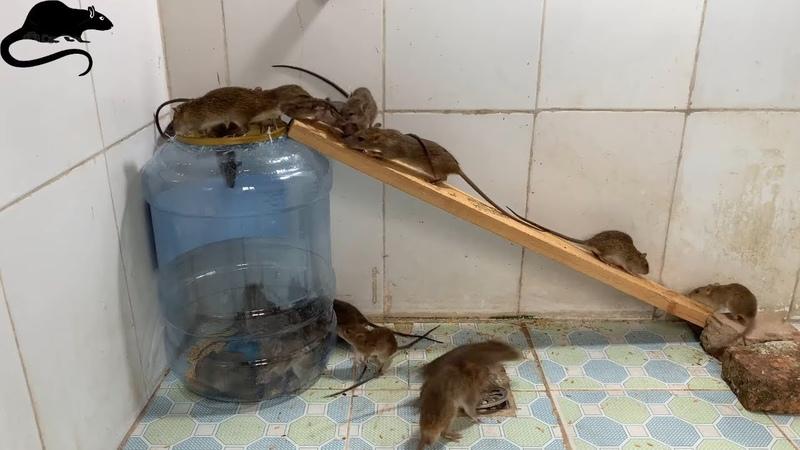 Perangkap kotak plastik / cara membuat perangkap tikus dengan kotak plastik