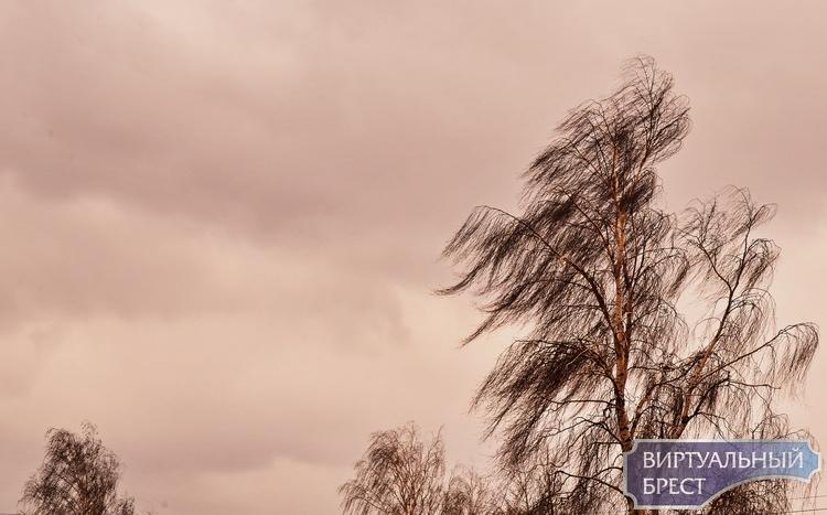 Пока в мире бушует пандемия коронавируса, в Беларуси - хорошая погода (атмосферные фото)