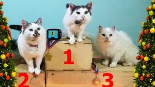 Смешные Три кота и котёнок Мурка на Новогодней полосе препятствий для котиков | Лиза и питомцы