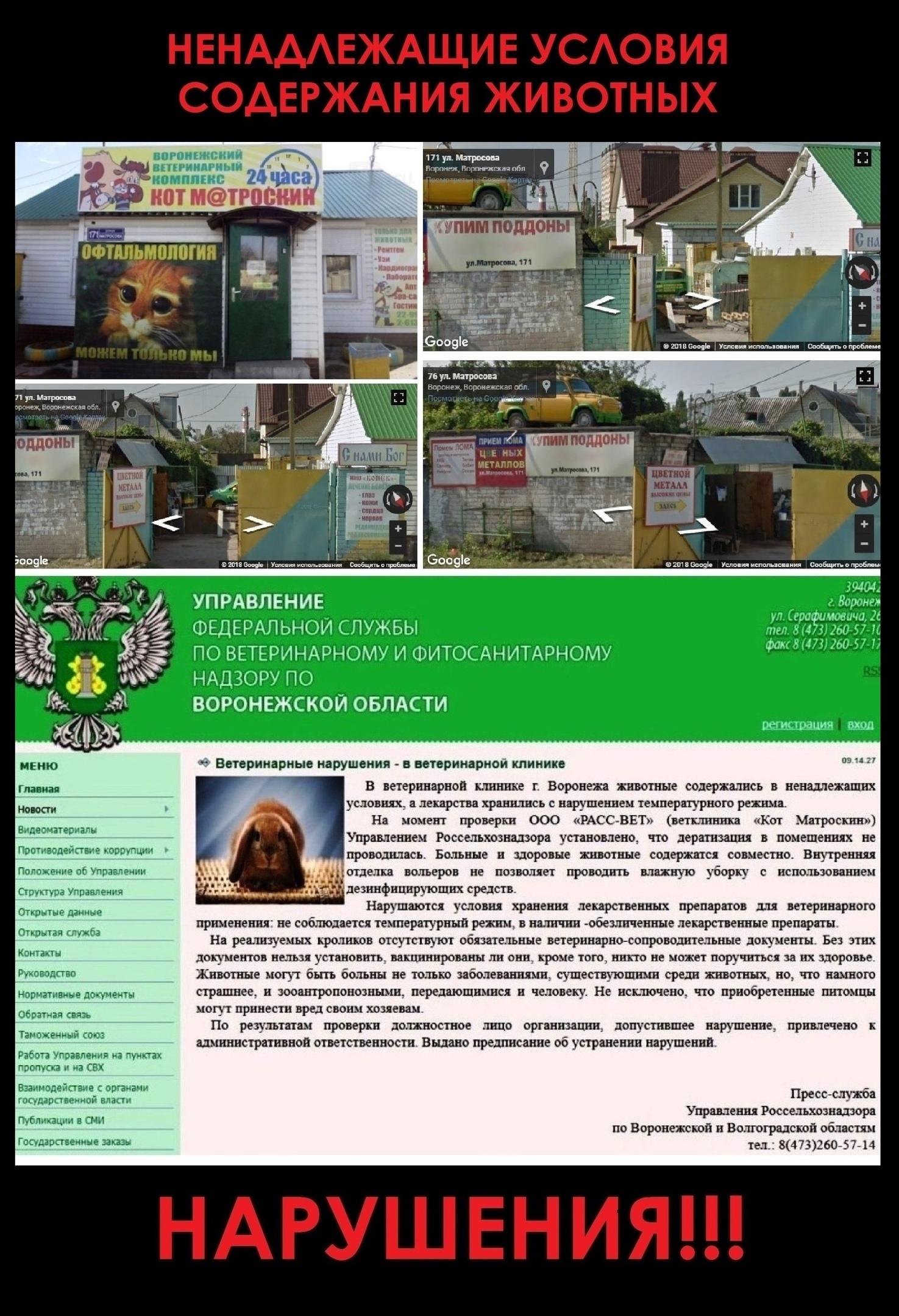 18+ ВЕТЕРИНАРА-ОФТАЛЬМОЛОГА Л.СОЛОМАХИНУ (г.ВОРОНЕЖ)— ОБХОДИТЬ СТОРОНОЙ!!!, изображение №3