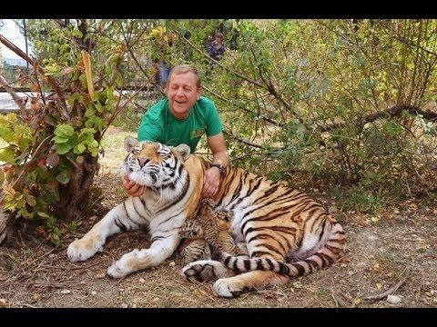 ЭКСТРЕННЫЙ ВЫПУСК Родила амурская тигрица МЫ В ВОЛЬЕРЕ !Amur tigress gave birth !