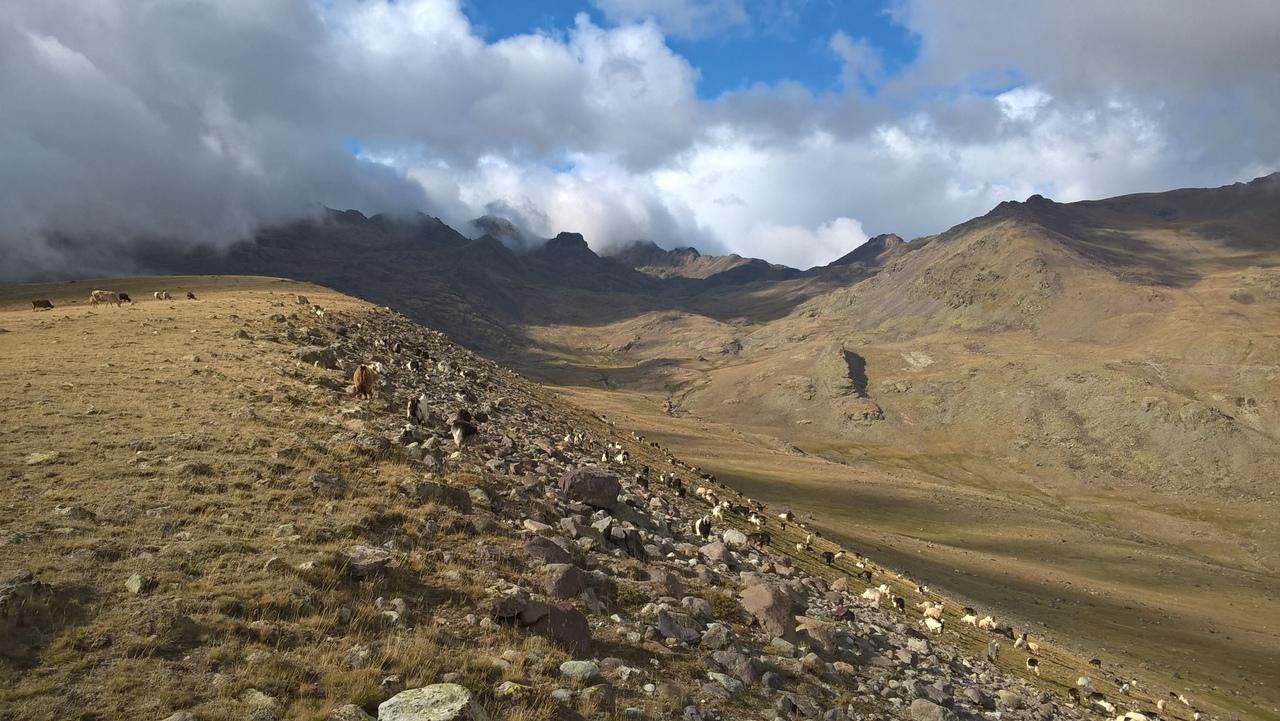 Коровы и стадо коз в горах Качкар