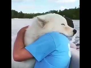 Животные тоже любит нас Animals also love us