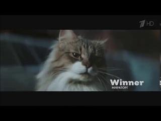 Реклама Мираторг Корм для кошек Виннер - Май 2020