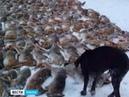 Царская охота на зайцев