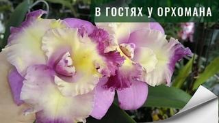 В гостях у орхомана. Как выращивают орхидеи в Доминикане. #вгостяхуорхомана #обзорорхидей #орхидеи