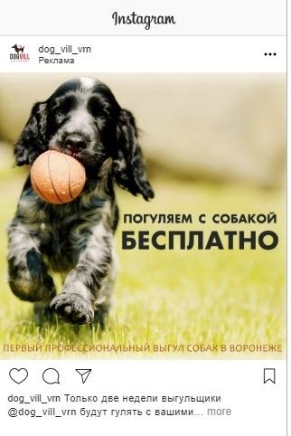 Кейс: продвижение стартапа по выгулу собак, изображение №21