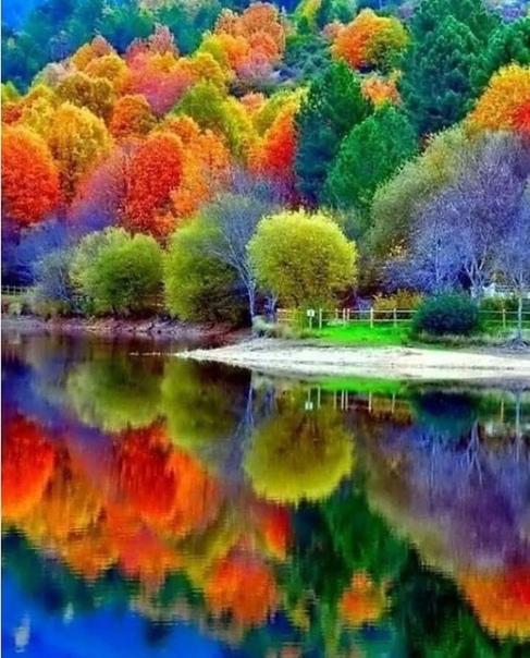 Только осенью можно увидеть такое разнообразие красок (источник: gofazenda)