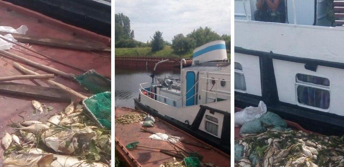 В Днепровско-Бугском канале зафиксирована гибель рыбы