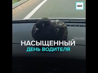 Очень странный день самого обычного водителя — Москва 24
