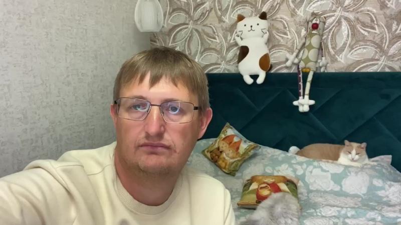 mimer.ru | Ответ ветеринара: В чем отличие кошачьего корма от собачьего?