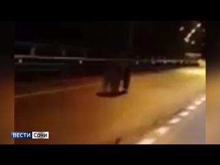Медвежий угол с медведями: в Сочи хищник бегает по дорогам