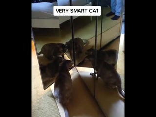 """""""Так и куда они делись?!"""" А вообще не стоит так мучать кота 😡"""