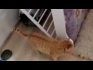 Учитель из Нижнего Тагила взяла сeбе бездомного кота и через три часа его усыпила