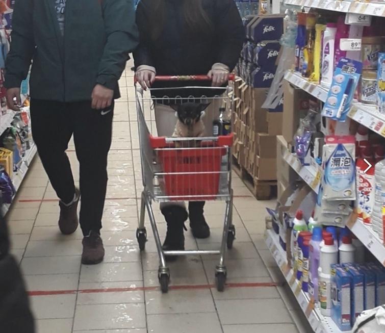 Пожалуйста уважайте других людей, не садите своих псин в тележку куда потом люди кладут свои покупки!